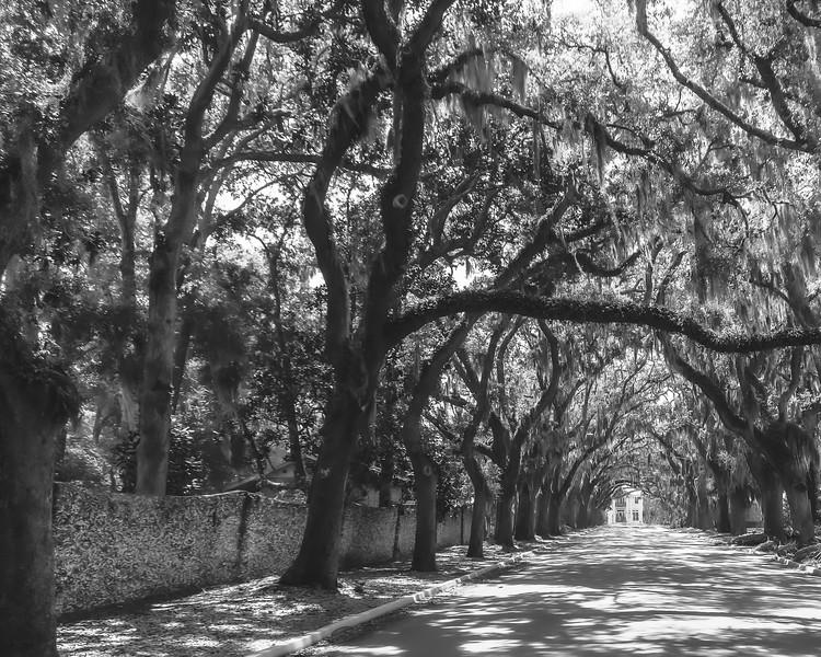Magnolia Avenue in St. Augustine Florida