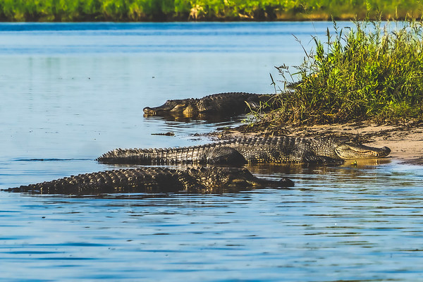 St. Johns River Airboat Ride in Brevard County Florida