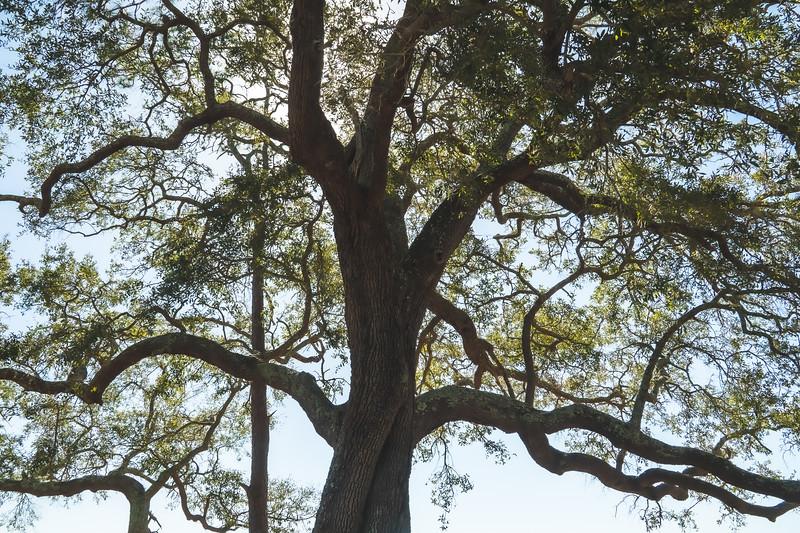 St. Marks National Wildlife Refuge in St. Marks Florida