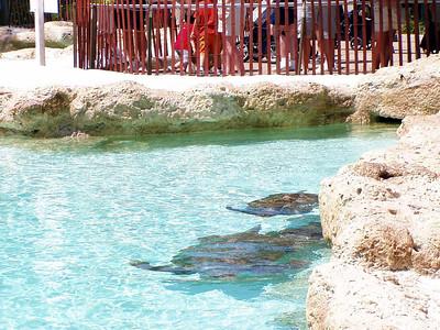 10   SeaWorld - Orlando
