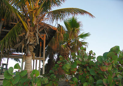 Palm trees and sea grapes along the beach at Valhalla Point Resort.
