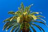 A palm tree on Sanibel Island, Florida, USA.