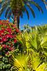Tropical vegetation of bougainvillea flowers and palms on Sanibel Island, Florida, USA.