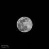 """Full """"Flower"""" Moon - 05/10/2017 B&W Version"""