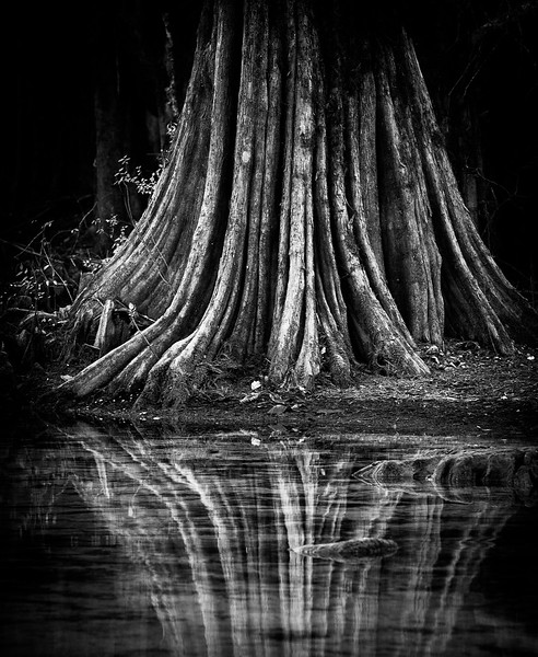 Waters Edge Cypress