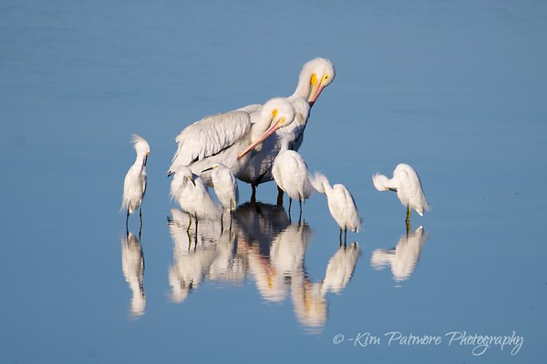 Reflections - Ding Darling Refuge