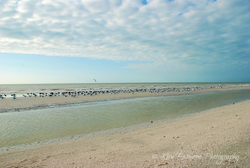 Sanibel Sandbar Birds