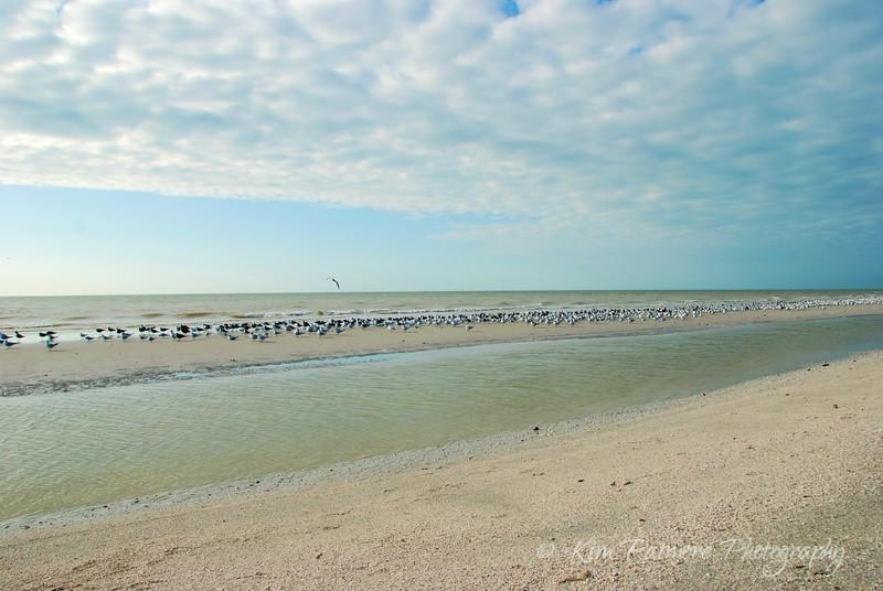 Sanibel Sandbar Birds