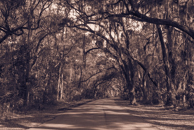 Jekyll Island with Spanish Moss in the Live Oaks