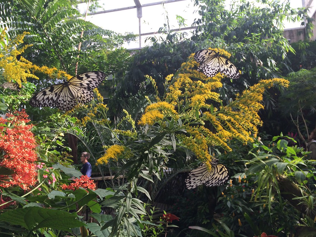 Kanapaha Botanical Gardens, Gainesville
