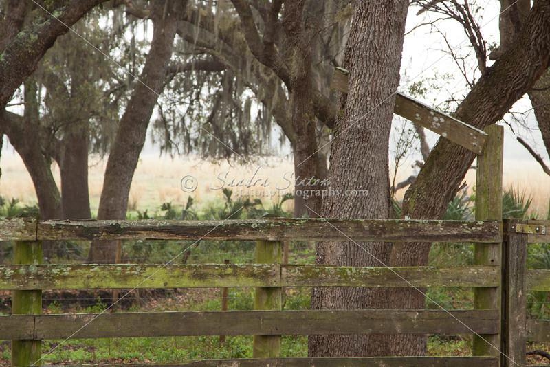 Across Fence SS32143