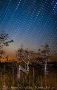N Tree Star Trails