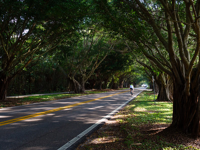 Cyclist Under Banyan Trees, Hobe Sound, Florida (49381)