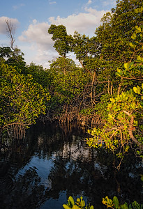 Small Waterway in the Vitolo Family Preserve on Hutchinson Island, Fort Pierce, Florida (29151)