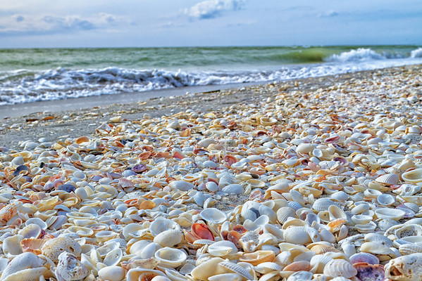 Seashells on Sanibel