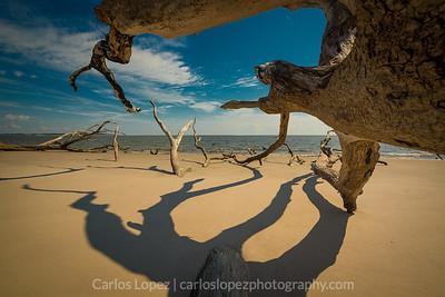 Driftwood Beach #3