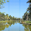 Beautiful palm trees reflected in Glade Lake at Fairchild Tropical Botanical Gardens.  Fairchild is a world premier tropical gardens, with the largest collection of palm and cycads in 83 acres.
