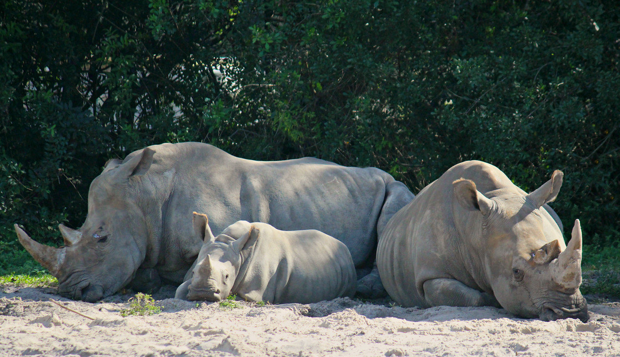 White Rhino Anna With Mom And Gradma