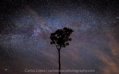 Pine Milky Way