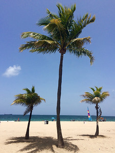 Palm trees on Ft Lauderdale Beach