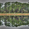 Reflection of Pines