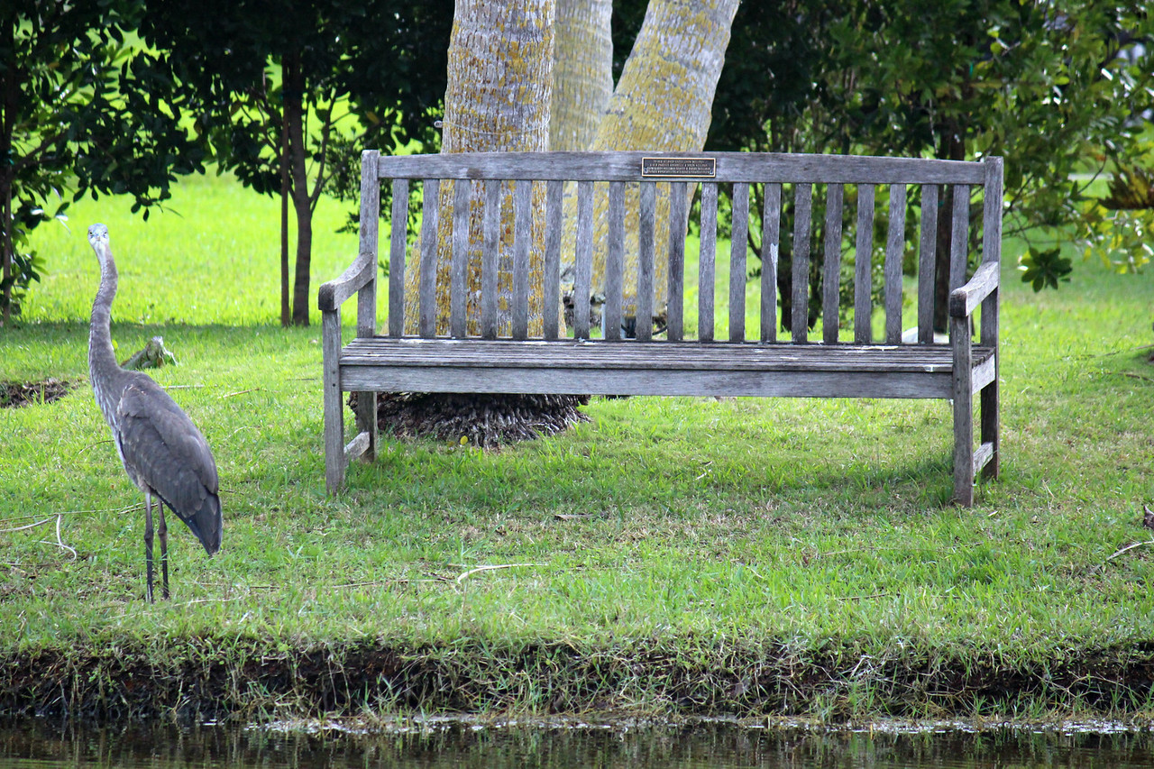 You're Iguana Have To Sit Heron Wait