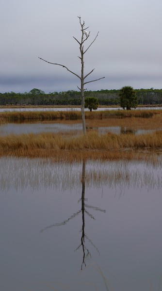 Reflection of single tree