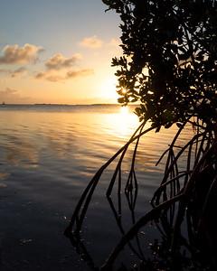 Mangrove Sunset, Big Pine Key, Florida  (29742)