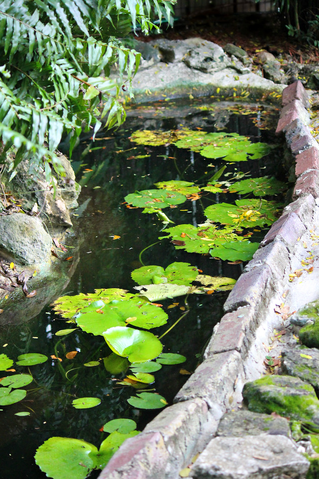 Languishing Lily Pond
