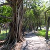 Pembrook Pines, FL ~ Banyan Trees