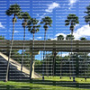 Tall Washingtonia Palm trees guide the way up the highway ramp in Florida.