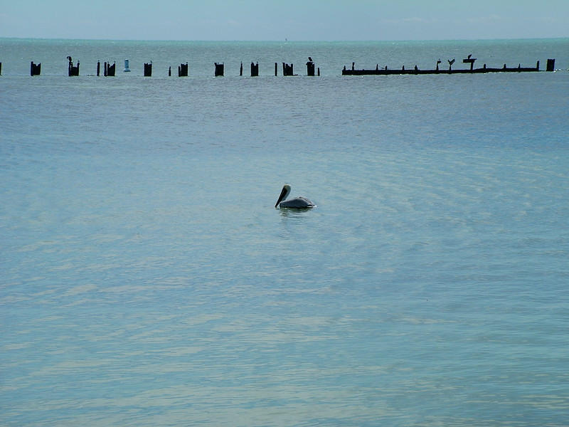 Clarence S. Higgs Memorial Beach - Key West, FL