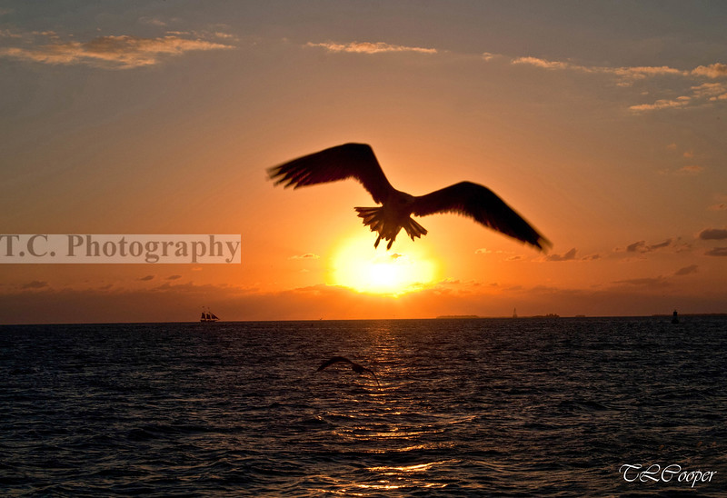 Key West Sunset with Seagull