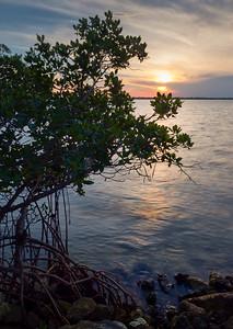 Vitolo Family Preserve, Hutchinson Island, Ft. Pierce, Florida (29176-29178)