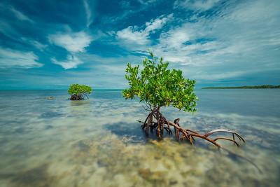 Marathon Mangrove #1