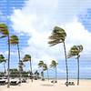 Strong winds sway palm trees on Fort Lauderdale Beach as Tropical Storm Laura lashes the east coast of Florida, USA.