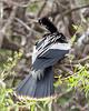 herons mating dance (12 of 29)