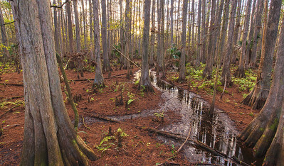 The Enchanted Swamp
