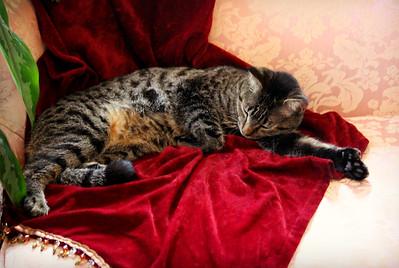 Nap Time At The Hemingway House