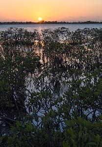 Mangroves Sunset, Big Pine Key, Florida (45562)