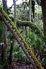 Ferns, Moss, Lichens