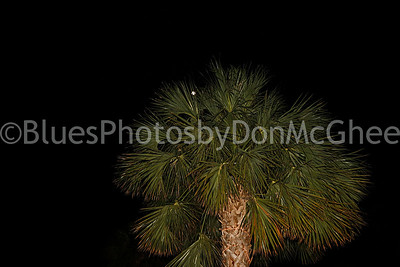 Full Moon peeking through a palm
