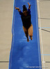 (Casey Brooke Lawson / Gator Country) Junior Melanie Sinclair competes on vault during the Gators victory over the Oklahoma Sooners in Gainesville, Fla., on January 9, 2009.