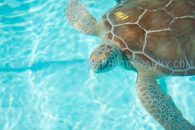 Turtle-0996