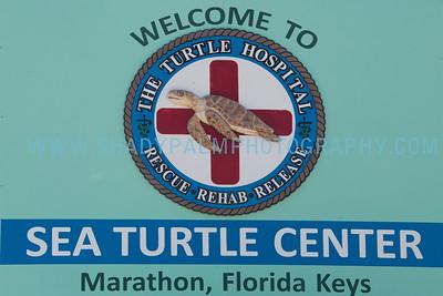 Turtle-1056