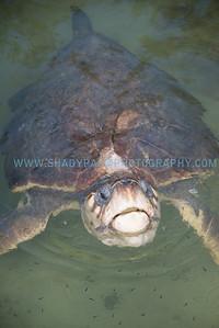 Turtle-1045