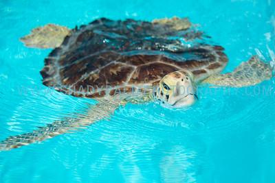 Turtle-1000