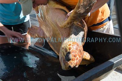 Turtle-1067