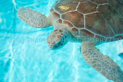 Turtle-0997