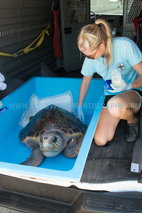 Turtle-1094
